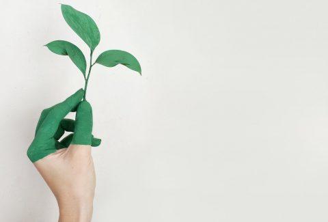 ¿Sabes qué es el marketing verde? Enterate como funciona y cómo usarlo en una campaña en esta nota. ¡Seguí leyendo!